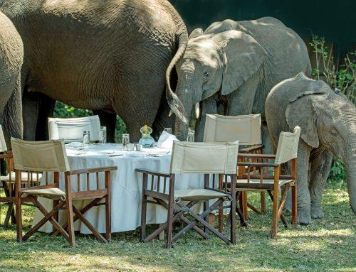 The Elephant in the Room or How I Failed WritePublishGrow